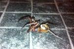 Hậu quả kinh hoàng từ vết nhện độc cắn
