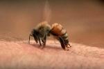 Khách du lịch bị ong đốt phải nhập viện