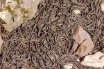 Nổi da gà xâm nhập hang động nhung nhúc rắn độc