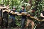 Rùng rợn clip lấy thân mình làm mồi nhử trăn Nam Mỹ khổng lồ