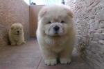 Chết cười với clip hai cún mập tranh nhau chụp ảnh
