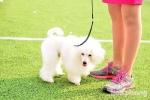Ảnh: Hàng trăm chú chó quý tộc giá trăm triệu hội tụ tại cuộc thi chó