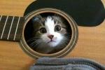 Lật tẩy những nơi trú ẩn kỳ quái của lũ mèo
