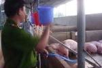 Hãi hùng ma trận thịt bẩn: Heo bị bơm nước