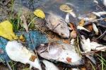 Cá chết trắng bờ biển miền Trung, ngư dân sợ hãi: Đâu là nguyên nhân?