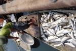 Video: Dân khóc nấc, vuốt ve cá chết trên sông Bưởi giữa đêm khuya