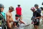 Dân Đà Nẵng đổ xô xem cá heo nặng 150kg dạt vào bờ biển