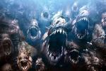 Rợn người với sức mạnh diệt mồi của 'ác quỷ' piranha