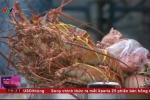 Video: Sự thật kinh hoàng về tôm hùm giá rẻ