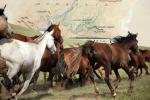 Đường đua theo vó ngựa Thành Cát Tư Hãn
