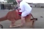 Nghịch dại cố leo lên lưng lạc đà bị ngã đau bẽ bàng
