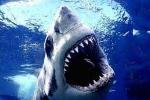 Clip: Hàng nghìn cá mập tụ tập tại bờ biển nước Mỹ