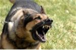Video: Làm gì khi bị chó tấn công?