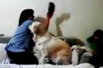Clip: Chú chó ngăn bà mẹ 'la sát' dùng giày đánh con