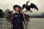 Độc đáo nghệ thuật câu cá bằng chim cốc ở Trung Quốc