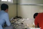 Mua bán trứng vịt lộn ở Hàn Quốc có thể bị phạt 1.000 USD