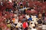 Hình ảnh hiếm chợ hoa đào Tết năm 1973