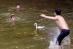 Thú vị lễ hội trai làng tay không bắt vịt dưới hồ