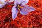 Nhà giàu Việt 'săn' nhụy hoa nghệ tây giá trăm triệu/kg