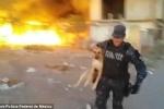 Cảm động clip cảnh sát cứu chú chó mắc kẹt đám cháy