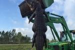 Cá sấu khổng lồ nặng gần nửa tấn bị bắn hạ ở Mỹ