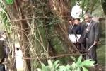 Ly kỳ chuyện 'cây sưa 150 tỷ' được dân làng 'sống chết' bảo vệ