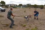 Phì cười pha giải cứu kangaroo mắc đầu vào xô sắt
