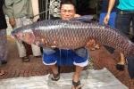 Câu được cá trắm 'khủng', nặng 24,5kg ở hồ sông Giá