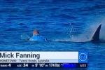 Clip: Cá mập tấn công VĐV lướt sóng ngay trên sóng truyền hình