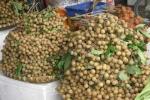 Hà Nội: Tràn lan nhãn lồng xuất xứ Trung Quốc