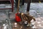 Bắt kẻ trộm mèo đâm công an xã trọng thương