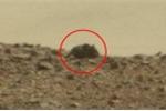 Video: Xôn xao hình ảnh chuột khổng lồ trên sao Hỏa