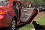 Đi ôtô trộm chó