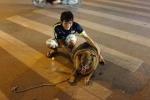 Phì cười clip chú chó béo nhất Hà Nội đi bộ cùng chủ để giảm cân