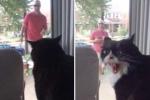 Clip: Chú mèo 'khóc thét' vì chủ đưa thú cưng mới về nhà