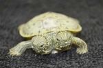 Clip: Kinh ngạc rùa con 2 đầu ở vườn thú Mỹ