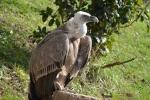 Li-băng trả tự do cho con chim kền kền bị nghi là gián điệp