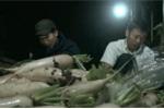 Được 'giải cứu', nông dân Hà Nội hối hả thu hoạch củ cải suốt đêm