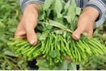 Hãi hùng những thực phẩm quen thuộc có nguy cơ nhiễm chì cao nhất