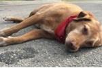 Chó cắn 5 người bị thương ở Hà Tĩnh rồi lăn ra chết