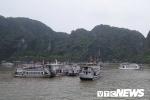 Ba thuyền trưởng bị 'cấm cửa' 6 tháng do vi phạm hoạt động trên vịnh Hạ Long