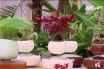Nghệ nhân bật mí cách tạo bonsai bay