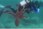 Khoảnh khắc bạch tuộc dùng xúc tu quấn thợ lặn tại vùng biển Nhật Bản