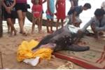Ngư dân Huế trắng đêm giải cứu cá heo bị mắc cạn