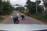 Rắn trườn qua đường bị 'cao thủ' đi xe máy tay không tóm gọn trong chớp mắt