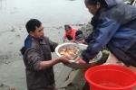 Ảnh: Về làng Thủy Trầm xem quăng lưới bắt cá chép đỏ trước ngày ông Công, ông Táo