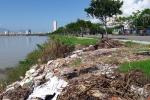 Ảnh: Rác thải dân đổ trộm bủa vây ven bờ sông Hàn, TP Đà Nẵng