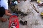 Thanh Hóa: Thương lái Trung Quốc len lỏi vùng giáp biên dụ dân bán đỉa