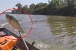 Clip: Cá mè 'khủng' phi thân lên thuyền, tự nộp mạng cho ngư dân
