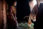 Ở nơi phụ nữ bị cấm vào nhà, phải ăn ngủ ngoài chuồng bò vào 'ngày đèn đỏ'